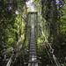 Gunung Mulu National Park. Sarawak, Borneo