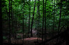 Trail of Silences (joshua mark) Tags: t nashville joshua mark c indiana trail steele phillippe silences tcsteele indiana46 artsroad46