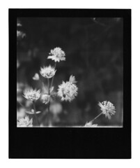 SX-70 B&W, Black Frame (Cris Ward) Tags: blackandwhite bw black slr london film monochrome contrast analog vintage square polaroid sx70 lomo lomography border monotone retro frame instant analogue greyscale impossible blackframe impossibleproject