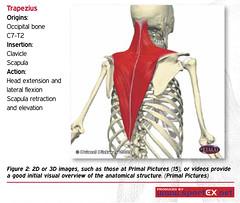 41DY25_2 (sportEX journals) Tags: education teaching rehabilitation massagetherapy sportex sportsinjury sportsmassage sportexdynamics