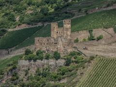 Burg Ehrenfels bei Rdesheim (kevinschmidt90) Tags: unesco rheintal rhein burg rdesheim wein mittelrheintal welterbe ehrenfels