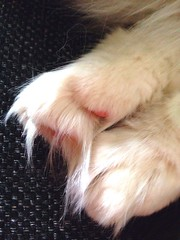 Paws (ulvstedt) Tags: cat chat paws katt tassar