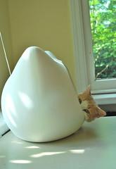 Otis in the Whiskas bed (rootcrop54) Tags: otis male ginger orange tabby whiskas cat head bed sunning sunshine morning sunroom 고양이 macska kedi 猫 kočka kissa γάτα köttur kucing gatto kaķis katė katt katzen kot pisică кошка mačka maček gorbe kitteh cc1000 cc4000