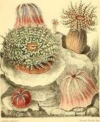Anglų lietuvių žodynas. Žodis tentacular reiškia a čiuptuvėlių; čiuptuvėlio formos lietuviškai.