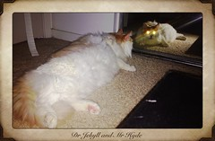 Cyclops (Catmio) Tags: orange cute cat ginger mix funny puff puffy maincoon