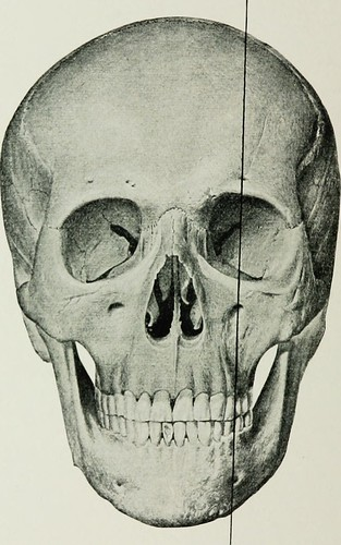 """Image from page 497 of """"Local and regional anesthesia : with chapters on spinal, epidural, paravertebral, and parasacral analgesia, and on other applications of local and regional anesthesia to the surgery of the eye, ear, nose and throat, and to dental p"""