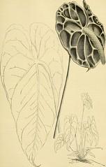 Anglų lietuvių žodynas. Žodis genus agave reiškia agave genties augalų lietuviškai.