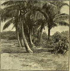 Anglų lietuvių žodynas. Žodis broom palm reiškia šluota palmių lietuviškai.