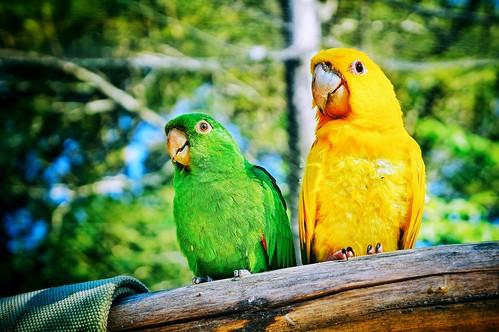 Casal Verde e Amarelo, Gramado Zoo