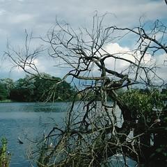 Idylle an der Müritz (ThomasKohler) Tags: lake tree square see squareformat baum müritz mueritz röbel roebel iphoneography instagramapp uploaded:by=instagram