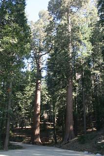 Sequoia Park 2 111