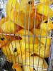 Dirty Rubber ducks in a cage (Sallyrango) Tags: usa festival boston market massachusetts ducks celebration local bizarre quirky rubberducks sowavintagemarket