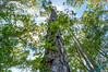 Trees (dbubis) Tags: trees green leaves hdr bubis dbphoto nex6