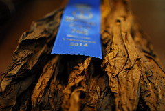 Blue and brown (sniggie) Tags: plant leaves farm kentucky cancer louisville dried firstplace tobacco nicotine carcinogen kentuckystatefair driedtobacco blueribbontobacco firstplacedriedtobaccoleaves