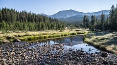Morning (stan.adam) Tags: forest sierra national anseladamswilderness
