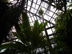 One of the greenhouses of Bucharest Botanical Garden (cod_gabriel) Tags: rainforest greenhouse romania jardimbotnico bucharest hortusbotanicus bucuresti rumania romenia sera romnia bukarest roumanie jardnbotnico  ortobotanico boekarest bucarest romnia botanischergarten  romanya rumnien roemeni rumnien  rumana romnia bucureti  bucharestbotanicalgarden rumunia ogrdbotaniczny  romnia botanisktrdgrd grdinabotanic botanikbahesi  bucareste     rumunjska      grdinabotanicbucureti  ser kebunbotani
