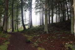 Fog in the Forest,Tyrebagger_sep 14_i57 (Alan Longmuir.) Tags: fog aberdeenshire grampian tyrebagger fogintheforest clintertywood