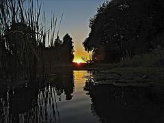 Last Light (Deepgreen2009) Tags: light sunset sky sun reflection home water last reeds garden evening pond glow clear ripples