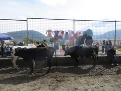 Otavalo-14