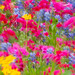 Wildflowers In Motion - 1st Place Flora - Kent Taylor