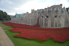 September 2014 of Blood Swept Lands and Seas of Red (CoasterMadMatt) Tags: city uk greatbritain red england sculpture building london tower castle art english architecture paul photography blood memorial photos unitedkingdom britain south united capital wwi great kingdom landmark exhibition structure september east photographs poppy poppies area gb borough british lands southeast swept fortress cummins toweroflondon seas hamlets 2014 capitalcity londonboroughoftowerhamlets paulcummins coastermadmatt september2014 coastermadmattphotography bloodsweptlandsandseasofred