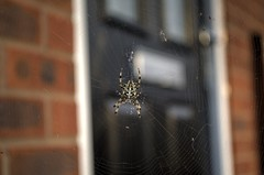 spider (matty87uk2) Tags: house spider nikon web creepy ugly flies d5100