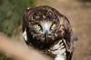 Milan (christiancp69) Tags: milan bird noir tamron camargue rhone 70300 d5100