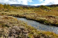 Lunndrren och Anaris, sep 2014 (rjan Mattsson) Tags: mountain creek sweden marsh bog jmtland vldalen mire anaris lunndrren