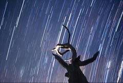 The trails of light (Kilian Frunz) Tags: light sky nature silhouette night canon stars brisbane startrails canon100d