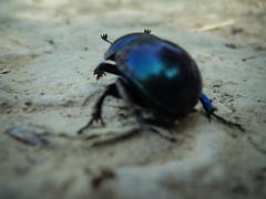 Egy felé megyünk? (jetiahegyen) Tags: rovar börzsöny túra túrázás kirándulás tour hiking outdoor