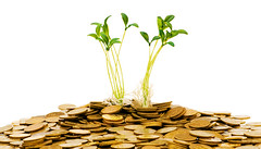 Investing (alannaul1) Tags: growth cultivated currency wealth plant dollar bill money savings concepts finance investment tree green flower life isolated making white new leaf nature ideas grow success business background crop stock bank environment banking gardening coin coins earnings agriculture garden beginnings seedling gold golden crisis recovery credit crunch