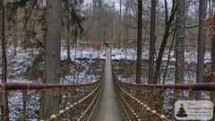 Hängebrücke im Binger Stadtwald