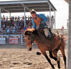 P3110246 (David W. Burrows) Tags: cowboys cowgirls horses cattle bullriding saddlebronc cowboy boots ranch florida ranching children girls boys hats clown bullfighters bullfighting