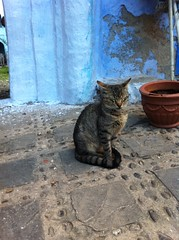 Cats everywhere! (AJoStone) Tags: morocco chefchaouen blue cats