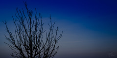 Poets dreams (Coisroux) Tags: trees dreams softness blue horizon skyline serene glowing glimmer luminescence poetry dusk silhouette treebranches peterborough sunsets glow clouds clearskies d5500 nikond atmospheric imposing clear depth landscape panoramic hamotonvale hues glorious minimalist