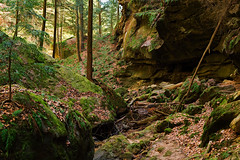 Around The Corner (jswigal) Tags: hocking hills park conkles hollow cantwell cliffs cliff old mans man cave sandstone stone rocks geology nature intimate landscape ohio woods woodland green yellow tan blue happy peaceful pretty beautiful gorgeous gorge outdoors outside tree hemlock fern plant moss leaves spring fall summer season seasons sony alpha a7r a7 minolta rokkor