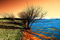 Lago Cecita (gianclaudio.curia) Tags: lago cecita calabria alberi acqua colore infrarosso infrared nikon d7000 digitale