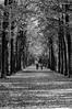 Walk in the park (Matt H. Imaging) Tags: ©matthimaging blackandwhite park sony sonyalpha slt slta55v a55 minolta minoltaaf70210mmf4 minolta70210f4 beercan outdoor