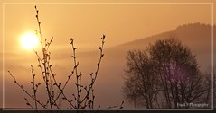 this is life... (friedrichfrank1966) Tags: sun suunshine sunrise silhouettes black light licht sonnenaufgang morgen sonne siegerland germany lumix nrw idylle mountain berge