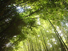 IMG_5289 (dk222222) Tags: green nature leaves relaxing bamboo