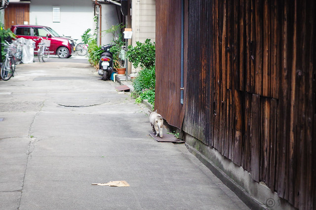 Today's Cat@2014-06-05