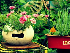 Late June (Renee Rendler-Kaplan) Tags: art june canon garden pumpkin wagon backyard mine gbrearview lavender stuff crates yardart redwagon gapersblock wbez rustyandcrusty 2014 chicagoist mossroses latejune reneerendlerkaplan canonpowershotsx40hs okours tyedyedhubcaps