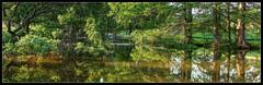 Pinetum Lake (ioensis) Tags: lake nature june gray bald reserve mo missouri summit cypress shaw 2014 pinetum jdl ioensis