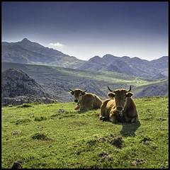 Braarredonda. PICOS DE EUROPA (Germn Yanes) Tags: espaa spain asturias picosdeeuropa casinas braarredonda