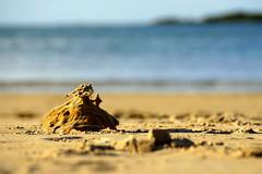 Sea sponge castle.... (Mary Trebilco) Tags: sea beach nature seaside sand bokeh australia tasmania seasponge portsorell freersbeach