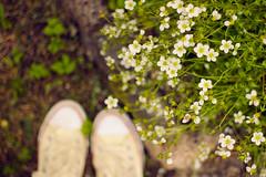 lovely may (Dasha Lapshina) Tags: pink flowers nature floral beautiful spring russia bokeh may saintpetersburg 2014 красиво природа россия весна цветы санктпетербург май