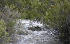 Moredun Dam Road, Guyra NSW