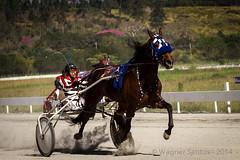 Grande Prmio Brasil de Trote (wagnerss2009) Tags: cavalo trote trotter hipdromo piracaia corridadecavalos americantrotter sociedadepaulistadetrote