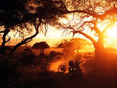 42-47480080 (mera449) Tags: africa park sunset tree expedition night tanzania outdoors evening moody tourist safari naturereserve wildliferefuge baobabtree tarangirenationalpark publicland easternafrica arusharegion incidentalpeople