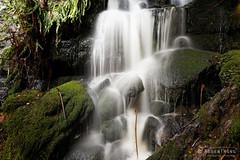 20140808-91-Waterfall in Styx valley.jpg (Roger T Wong) Tags: winter green water forest trek waterfall moss walk australia hike tasmania styx bushwalk canonef1740mmf4lusm tramp 2014 canon1740f4l temperaterainforest styxvalley canoneos6d rogertwong
